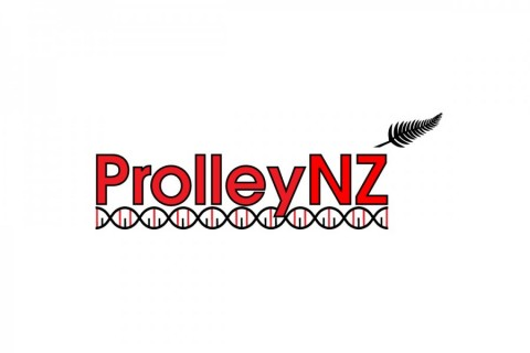 ProlleyNZ for sale